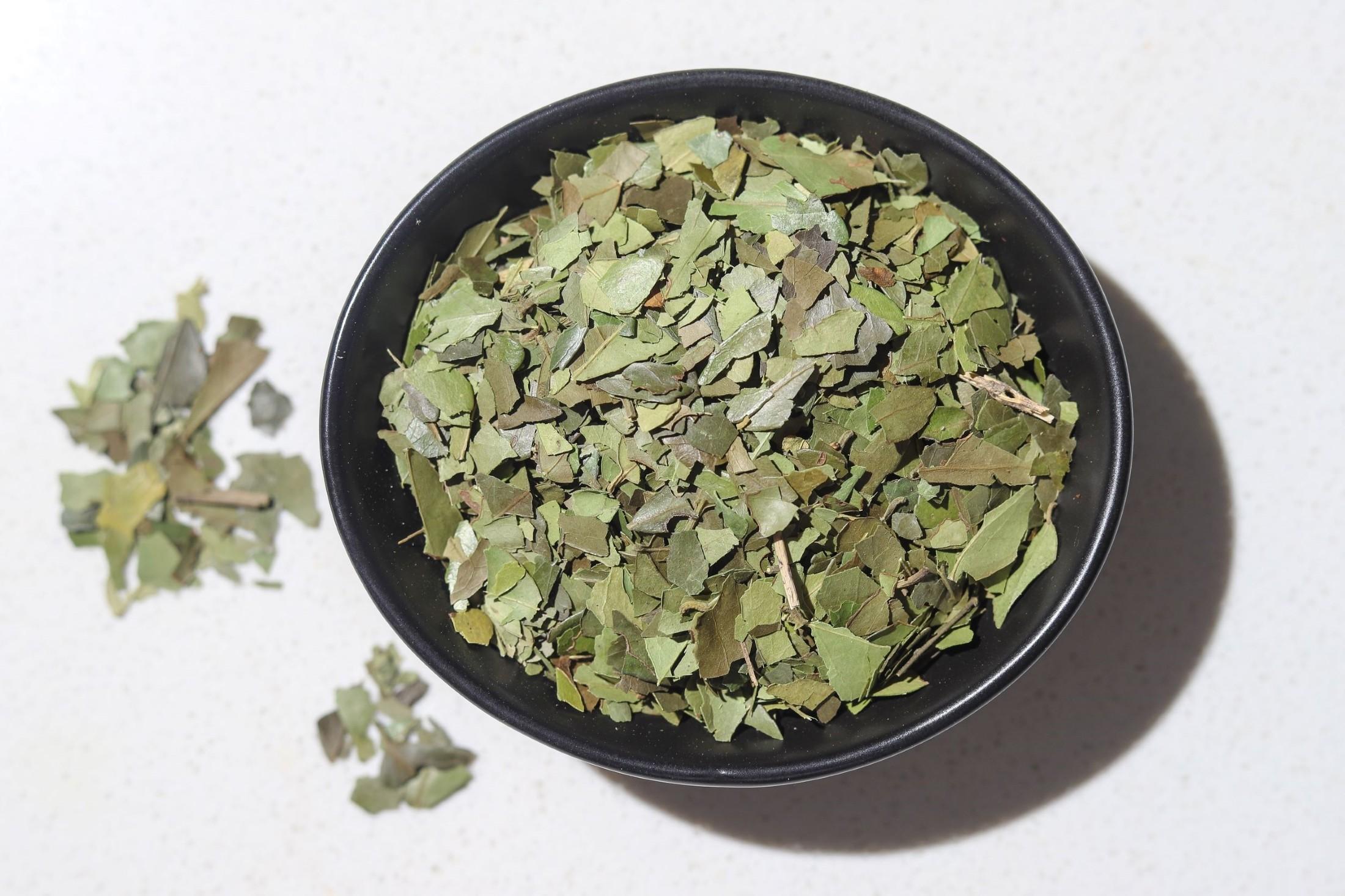 Buy Yaupon Tea Canada, Yaupon Tea USA, Ilex Vomitoria leaves